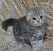 Ищу себе друга,  красивого и доброго котёнка