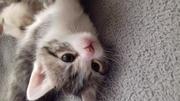 Игривый котенок ищет хозяина.  Отдам Бесплатно