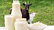 Продаю козье молоко в Ужгороде